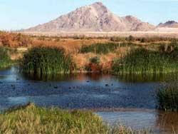Clark County Wetlands Park Vegas Attractions Vegas Com