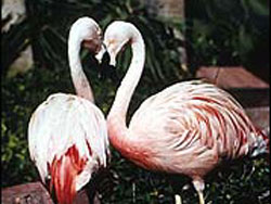 Wildlife Habitat at the Flamingo
