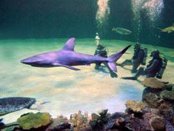 Mandalay Bay Shark Reef Mandalay Bay Shark Reef Las
