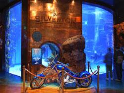 The Aquarium At The Silverton Hotel