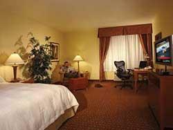 1 King 1 Bedroom Mini Suite