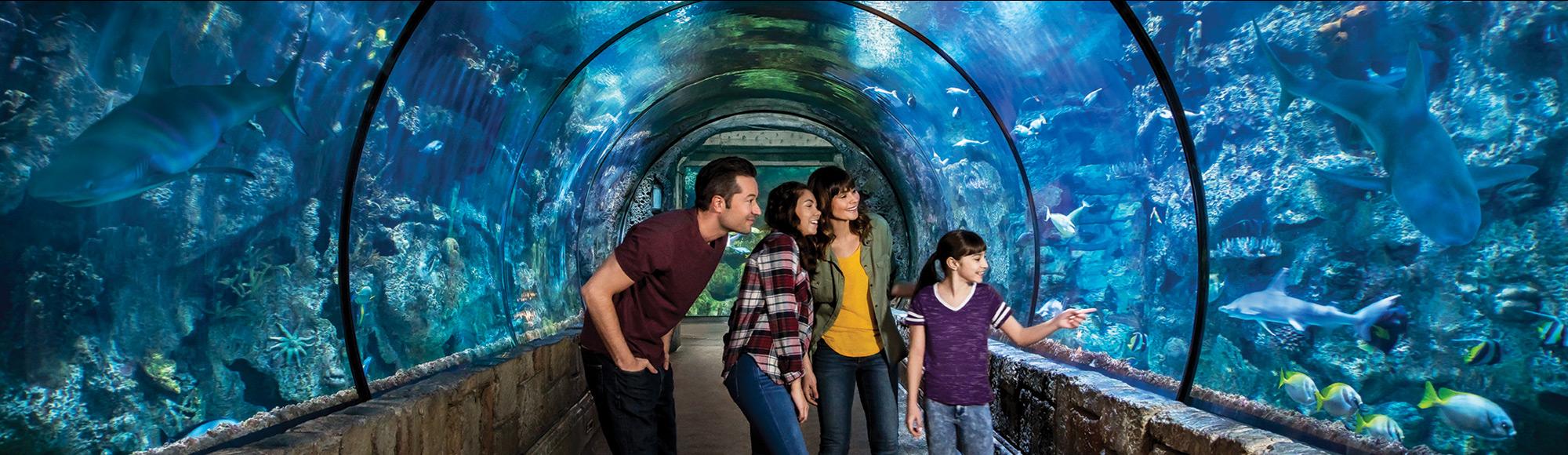 Shark Reef Aquarium attraction