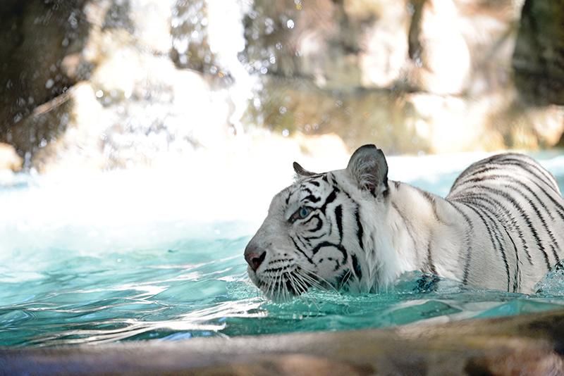 Siegfried and Roy's Secret Garden and Dolphin Habitat - Secret Garden Slideshow 11