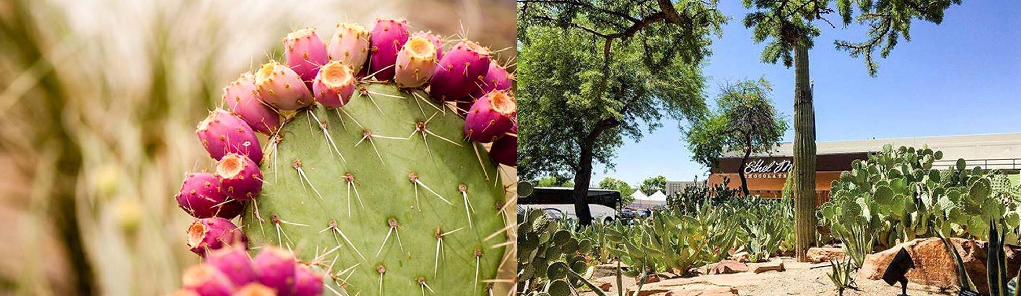 Ethel M Las Vegas Tickets Photos Reviews Vegas Com
