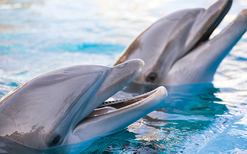 Siegfried and Roy's Secret Garden and Dolphin Habitat - Secret Garden Slideshow 15