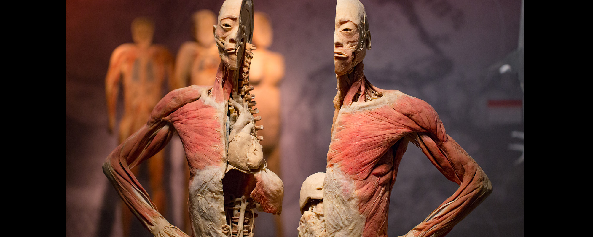 REAL BODIES at Bally's attraction