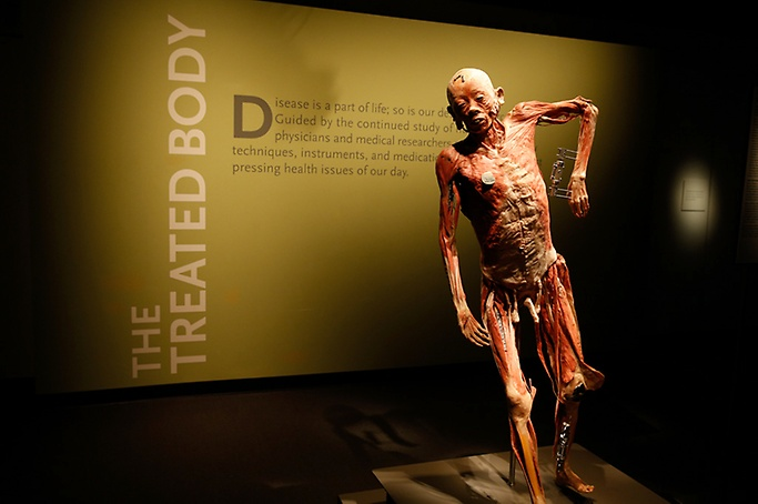 Bodies The Exhibition - Bodies