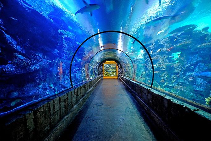 Shark Reef Aquarium - Shark Reef