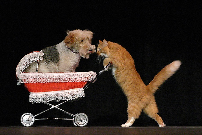Gregory Popovich's Comedy Pet Theater - Comedy Pet Theater