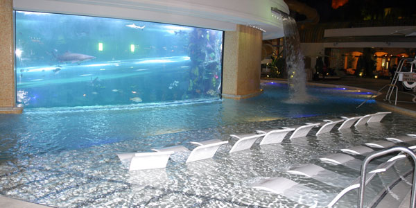 No need to DVR Shark Week this year, Golden Nugget's pool has you covered.  The Tank, as they like to call it, is their pool that hosts ...